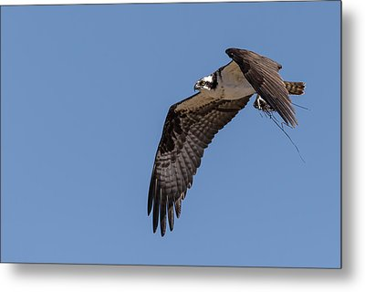 Metal Print featuring the photograph Osprey 2017-1 by Thomas Young