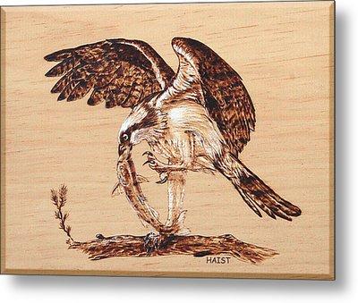 Osprey 3 Metal Print by Ron Haist