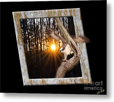 Osprey At Sunset  Black Metal Print by Donna Brown
