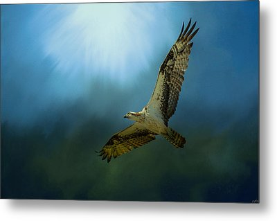 Osprey In The Evening Light Metal Print by Jai Johnson