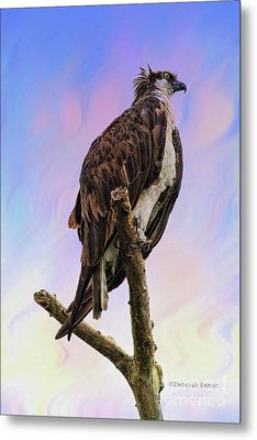 Osprey Perch Metal Print by Deborah Benoit
