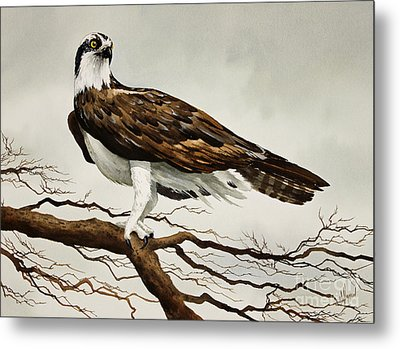 Osprey Sea Hawk Metal Print by James Williamson