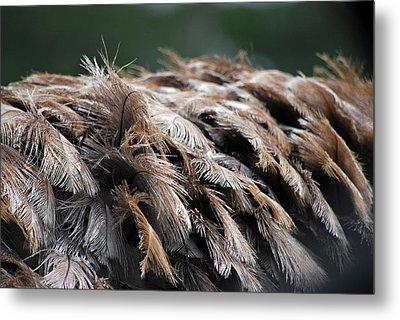 Ostrich Feathers Metal Print by Teresa Blanton