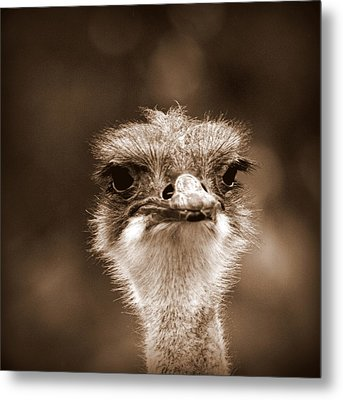 Ostrich In Sepia Metal Print by Tam Graff