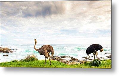 Ostrich Pair Beside Ocean Metal Print by Tim Hester