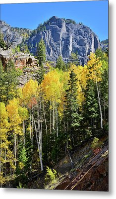Metal Print featuring the photograph Ouray Aspens by Ray Mathis