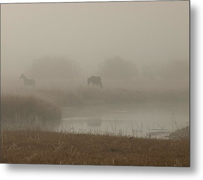 Out In The Fog Metal Print by DeeLon Merritt