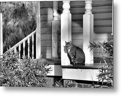 Out In The Sun Metal Print by Jan Amiss Photography