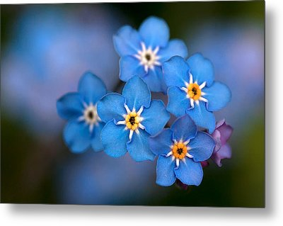 Out Of The Blue Metal Print by Shirley Mitchell