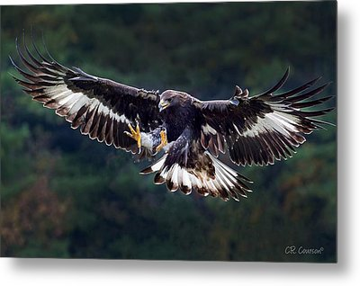 Out Of The Forest Metal Print by CR  Courson