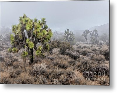 Out Of The Mist Metal Print by Sandra Bronstein