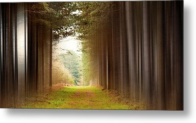 Out Of Woods Metal Print by Svetlana Sewell