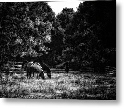 Metal Print featuring the photograph Out To Pasture Bw by Mark Fuller