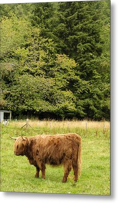 Metal Print featuring the photograph Out To Pasture by Christi Kraft
