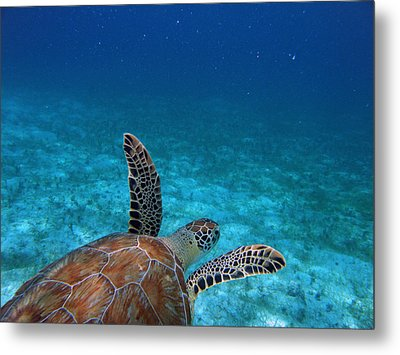 Out To Sea Metal Print by Kimberly Mohlenhoff