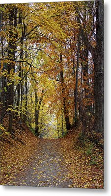 Over The Hill And Through The Woods In Autumn Metal Print by Barbara McMahon