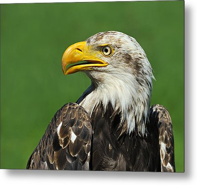 Over The Shoulder Metal Print by Tony Beck