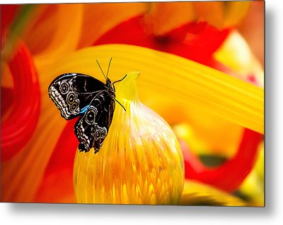 Owl Eye Butterfly On Colorful Glass Metal Print by Tom Mc Nemar