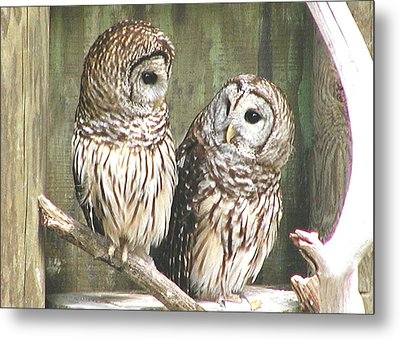 Owl Love You Forever Metal Print by Martha Ayotte