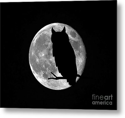Owl Moon Metal Print by Al Powell Photography USA