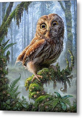 Owl Perch Metal Print