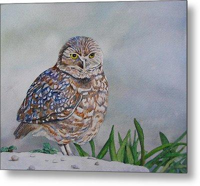 Owl Metal Print by Sharon Farber