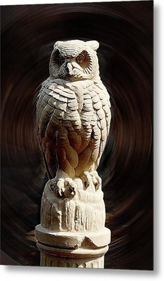 Owl Metal Print by Terry Cork