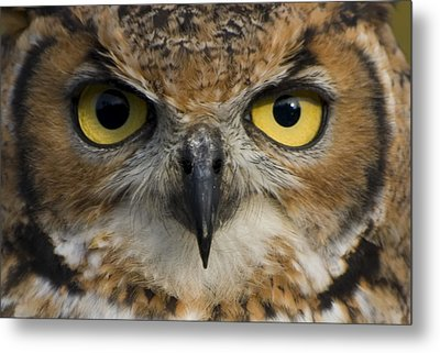 Owls Eyes Metal Print by Pixie Copley