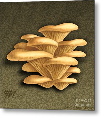 Oyster Mushrooms Metal Print by Marshall Robinson