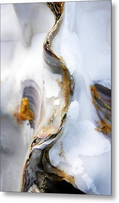 Metal Print featuring the photograph Oyster by Richard George