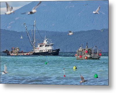 Metal Print featuring the photograph Pacific Ocean Herring by Randy Hall
