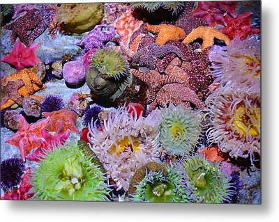 Pacific Ocean Reef Metal Print by Kyle Hanson