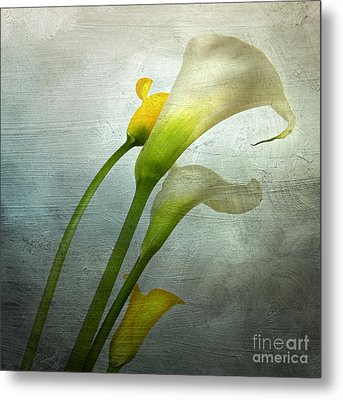 Painted Arum Metal Print by Bernard Jaubert