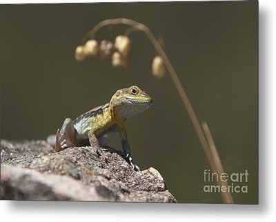 Metal Print featuring the photograph Painted Dragon by Bill Robinson