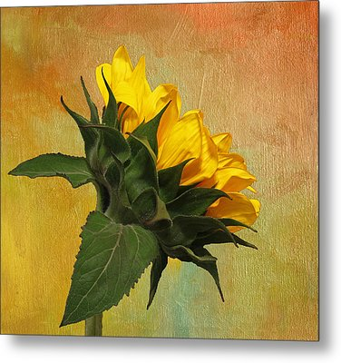 Painted Golden Beauty Metal Print by Judy Vincent