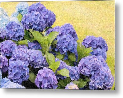 Painted Hydrangeas Metal Print by Gina Cormier