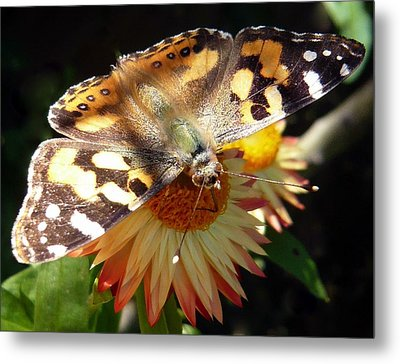 Painted Lady - Pit Stop 1 Metal Print by Esther Brueggemeier