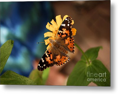 Metal Print featuring the photograph Painted Lady Butterfly by Eva Kaufman