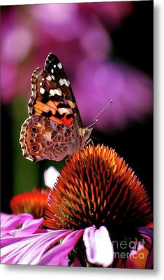Metal Print featuring the photograph Painted Lady by Lila Fisher-Wenzel