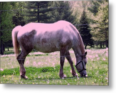 Metal Print featuring the photograph Painted Pony by Susan Carella