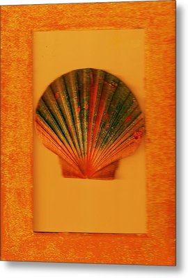 Painted Shell II Metal Print by Anne-Elizabeth Whiteway