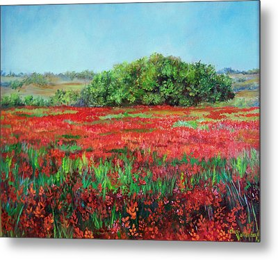 Painting Of Indian Paintbrush In Oklahoma Metal Print