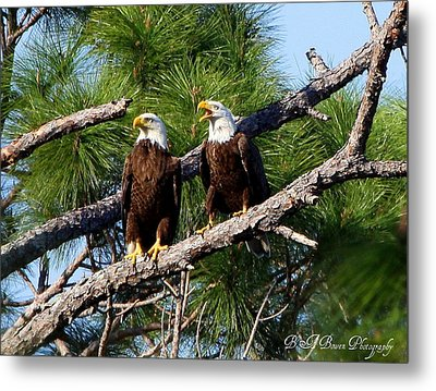 Metal Print featuring the photograph Pair Of American Bald Eagle by Barbara Bowen