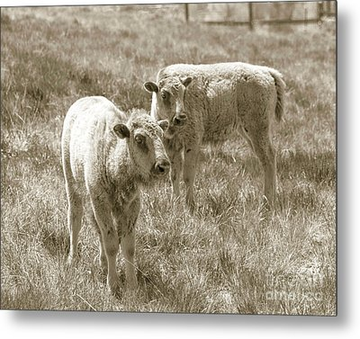 Metal Print featuring the photograph Pair Of Baby Buffalos by Rebecca Margraf