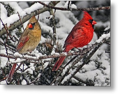 Pair Of Cardinals In Winter Metal Print