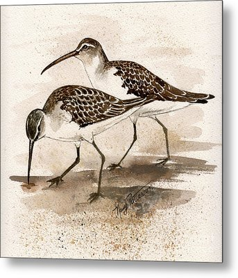 Pair Of Sandpipers Metal Print