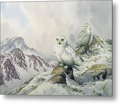 Pair Of Snowy Owls In The Snowy Mountains, Australia Metal Print by Carl Donner