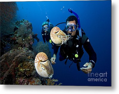 Palau Underwater Metal Print by Dave Fleetham - Printscapes