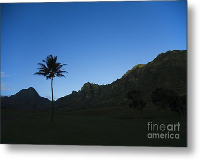 Palm And Blue Sky Metal Print by Dana Edmunds - Printscapes