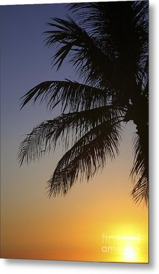 Palm At Sunset Metal Print by Brandon Tabiolo - Printscapes